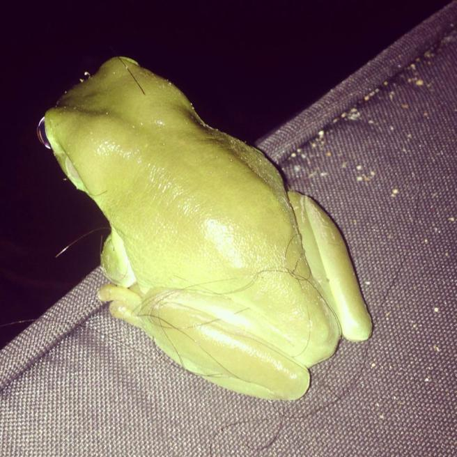 Another Green Tree Frog